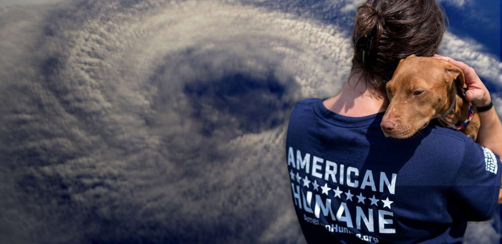 American Humane is assisting animals in South Carolina